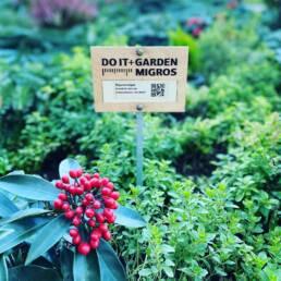 Viva Colores Migros Do it Garden Glattzentrum Beschilderung Unikat Beschriftung Schild Holz Steckschild Design Handarbeit Laser gelasert Logo Tafel